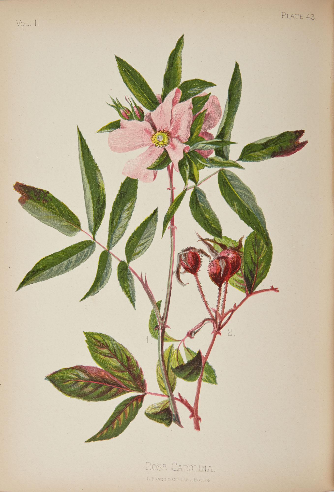 Lot image - MEEHAN, THOMAS  The Native Flowers and Ferns of the United States in their Botanical, Horticultural, and Popular Aspects.