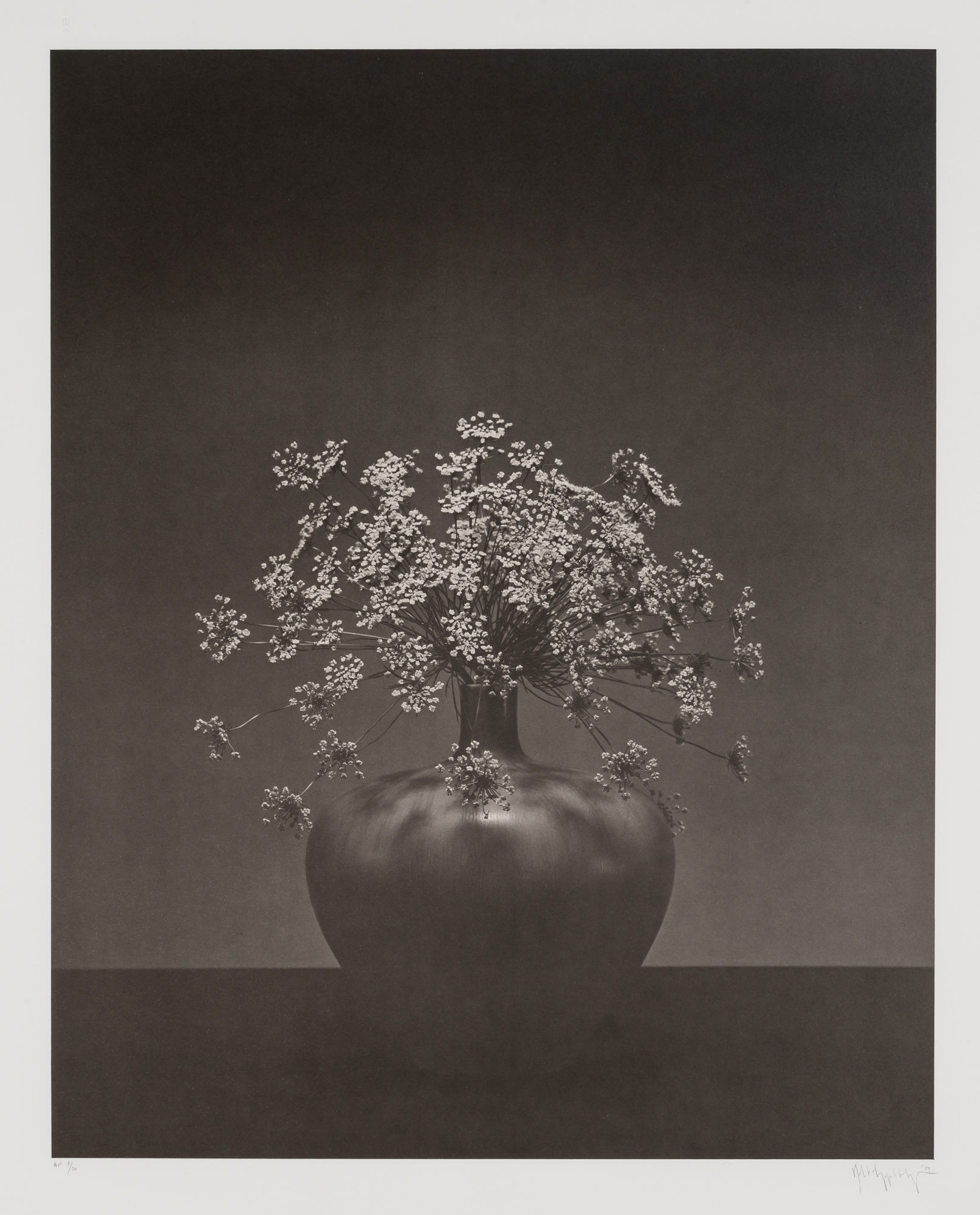 Lot image - MAPPLETHORPE, ROBERT (1946-1989)  Queen Annes Lace in vase.