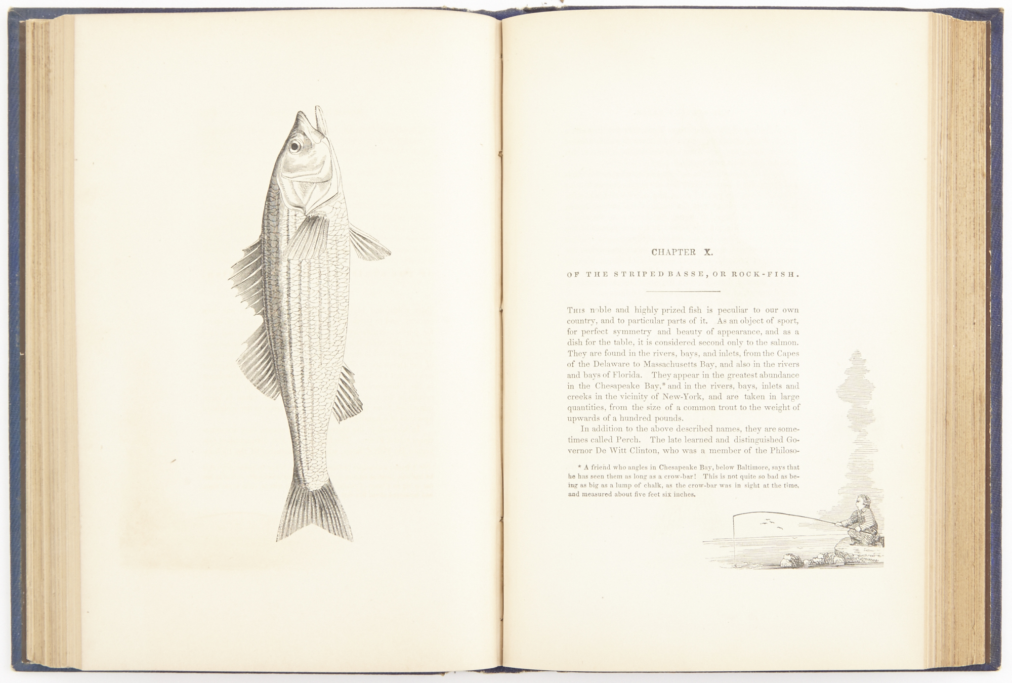 Lot image - [BROWN, JOHN J.]  The American Anglers Guide;  or, Complete Fishers Manual, for the United States: containing the opinions and practices of Experienced Anglers of Both Hemispheres.