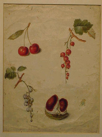Lot image - Continental School 18th Century CHERRIES, GOOSEBERRIES AND CHESTNUT