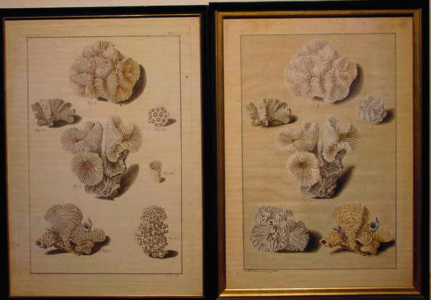 Lot image - B.A. Moll German, 19th century STUDIES OF CORAL