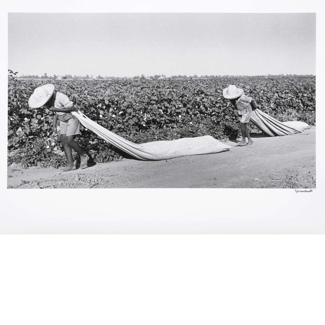 Lot image - EISENSTAEDT, ALFRED (1898-1995)  Children of Lonnie Fair family picking cotton in Scott, Miss. 1936