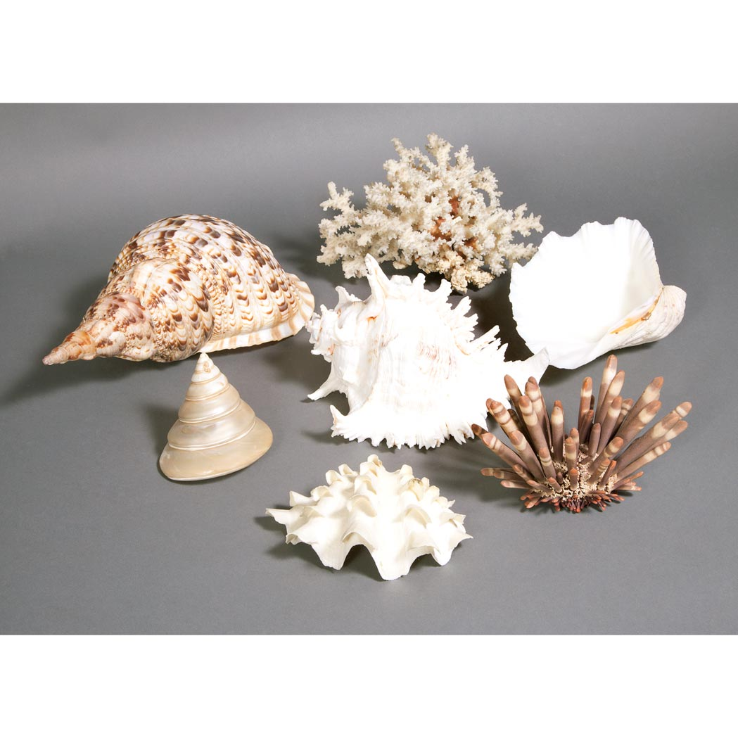 Lot image - Group of Coral and Shell Specimens; Together with a Continental Mirrored Glass and Porcelain Table Plateau