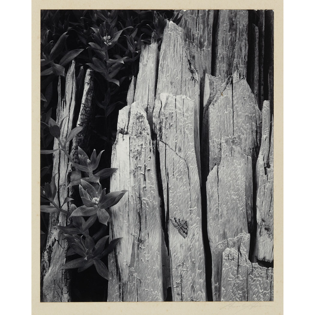 Lot image - ADAMS, ANSEL (1902-1984) Pair of photographs by Ansel Adams from Portfolio 2, 1950, including [Forest, early morning, Mount Rainier ...