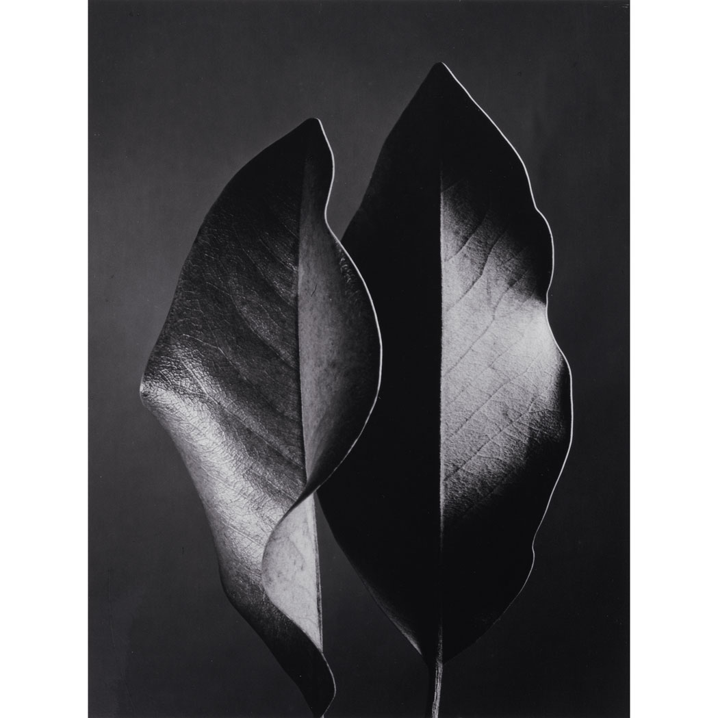 Lot image - BERNHARD, RUTH (1905-2006)  [Two Leaves, Hollywood, 1952]