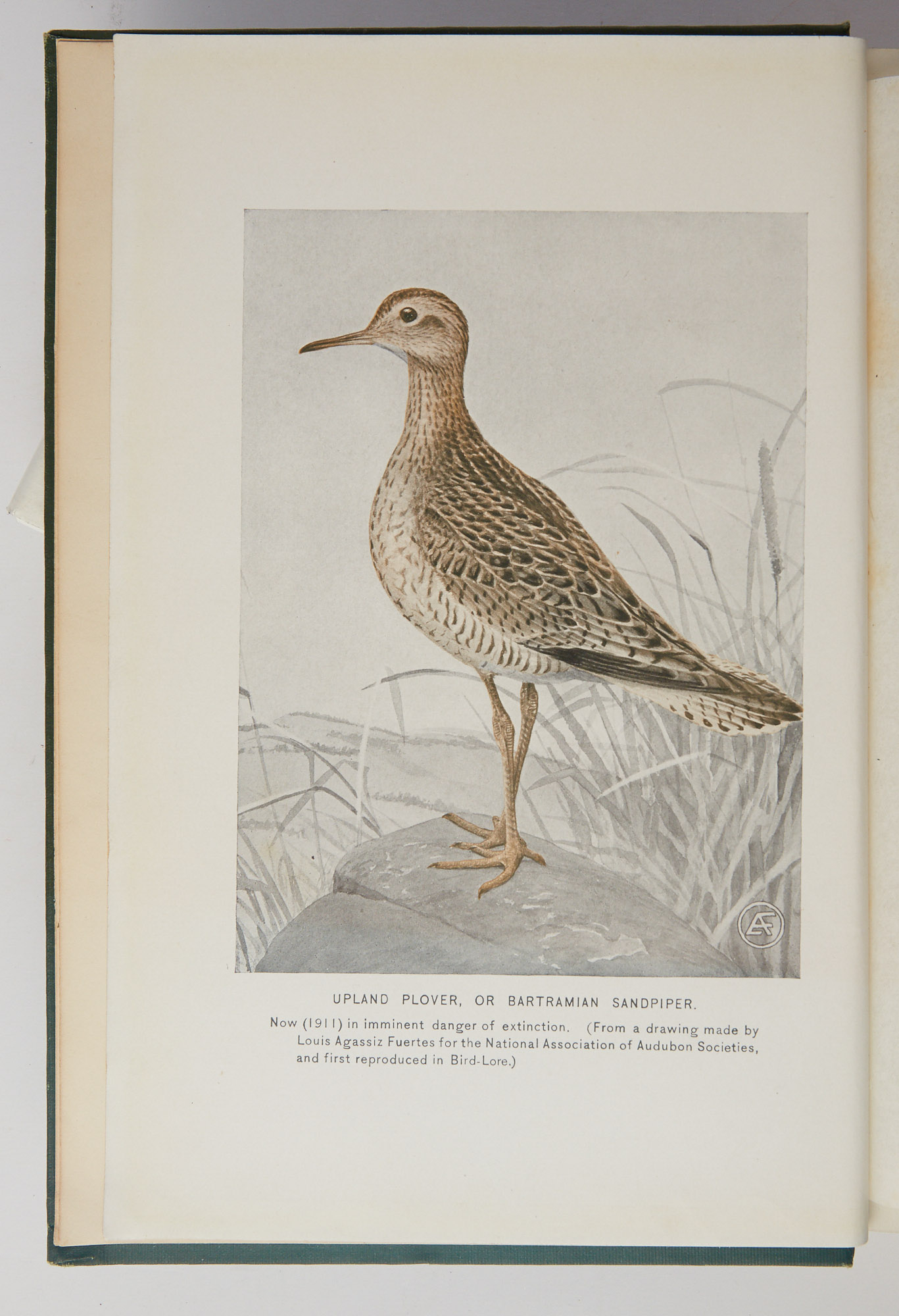 Lot image - FORBUSH, EDWARD HOWE  A History of the Game Birds, Wild-Fowl and Shore Birds of Massachusetts and Adjacent States.