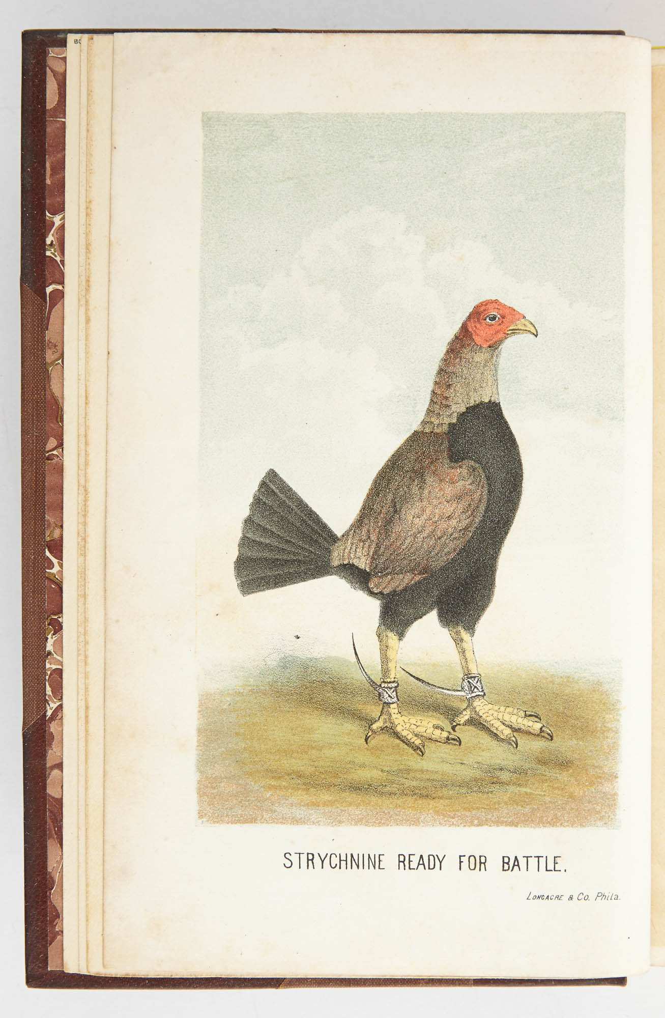 Lot image - [EXTRA-ILLUSTRATED]  COOPER, J. W.  Game Fowls, Their Origin and History...