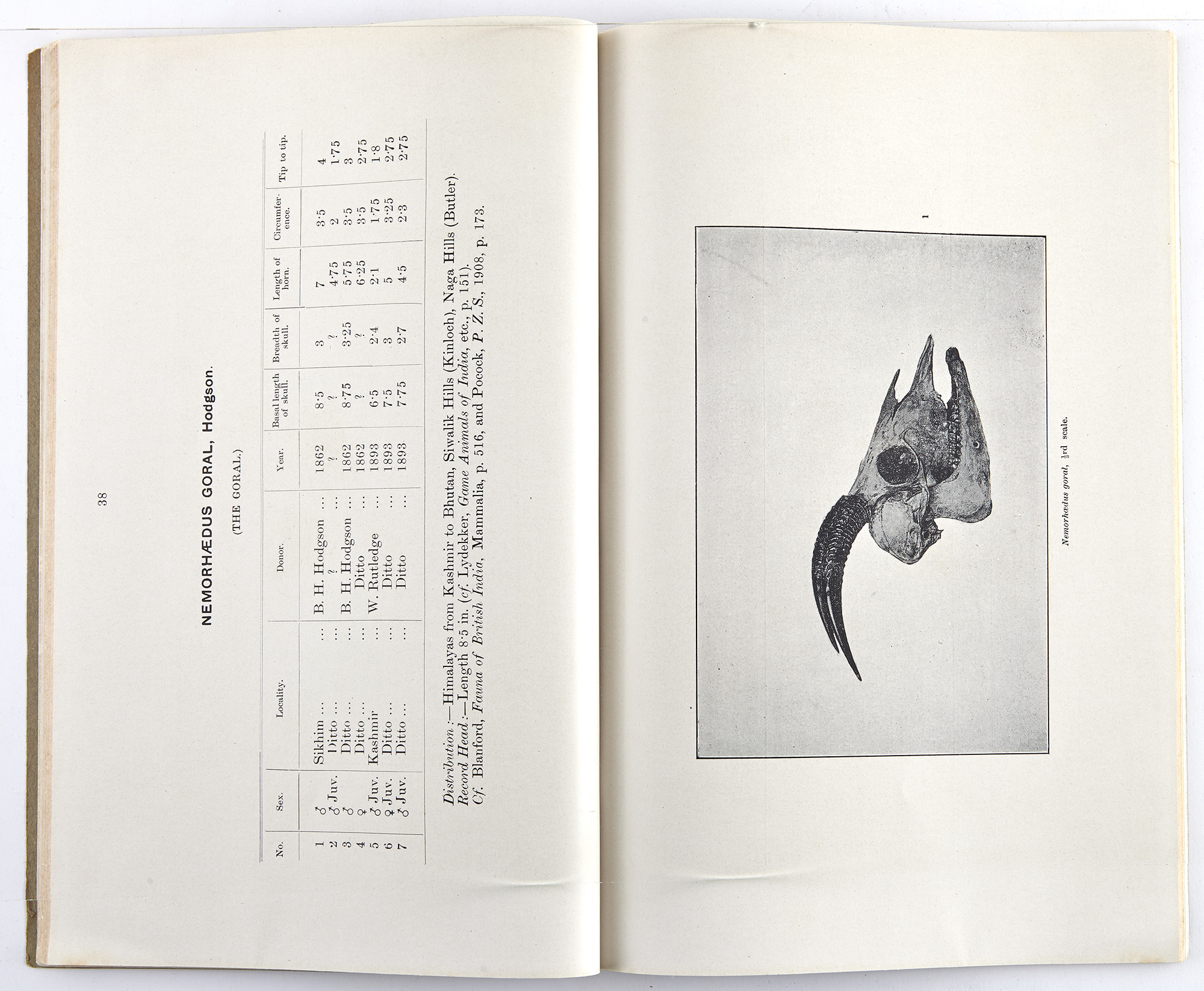 Lot image - [BIG GAME-TROPHIES]  BENTHAM, T. An illustrated catalogue of the Asiatic Horns and Antlers in the Collection of the Indian Museum.