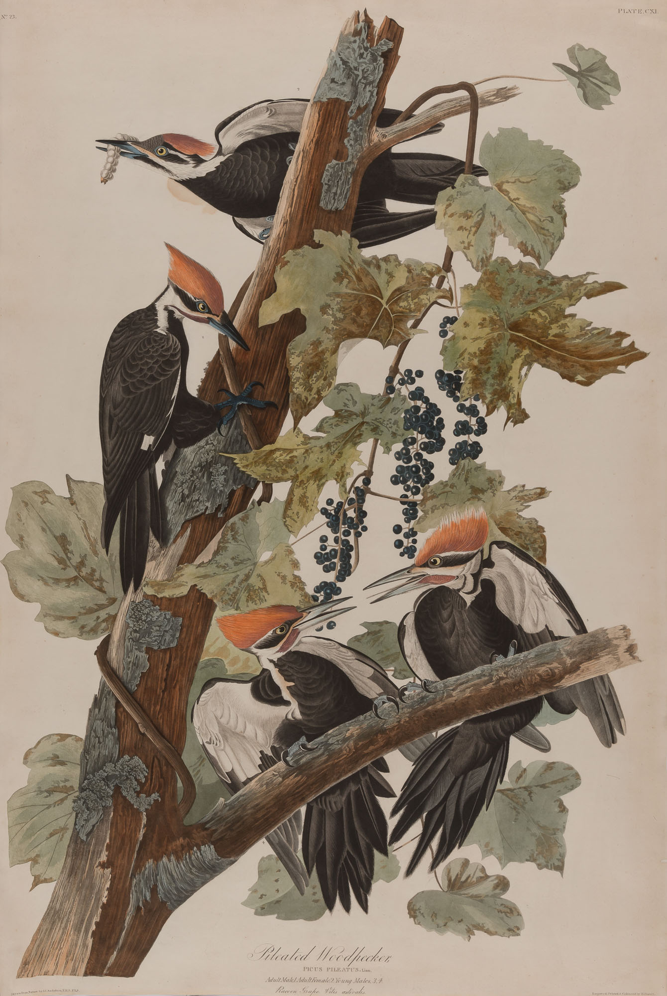 Lot image - After John James Audubon
