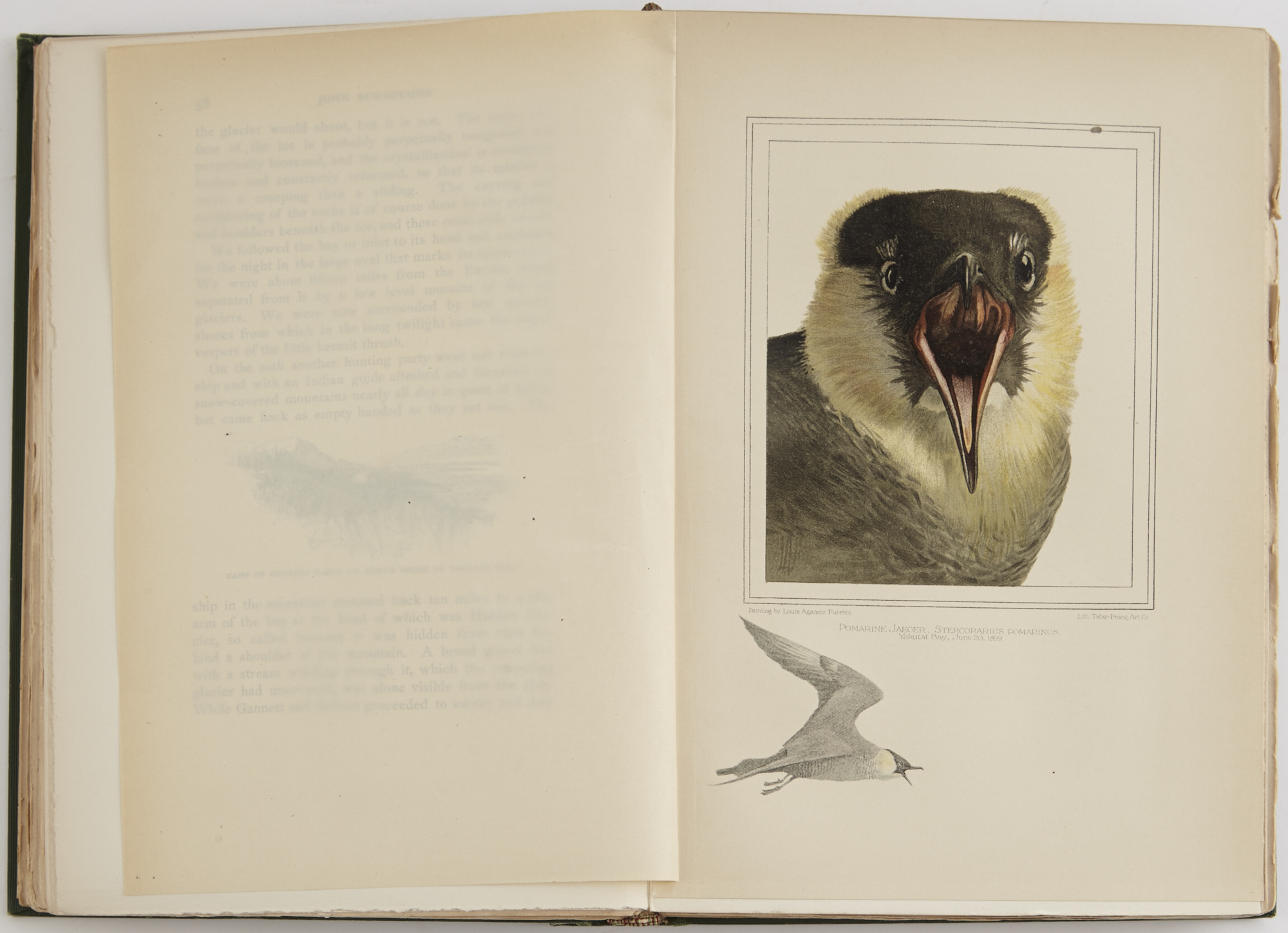 Lot image - BURROUGHS, JOHN; MUIR, JOHN; and GRINNELL, GEORGE BIRD  Harriman Alaska Expedition. Volumes I & II.