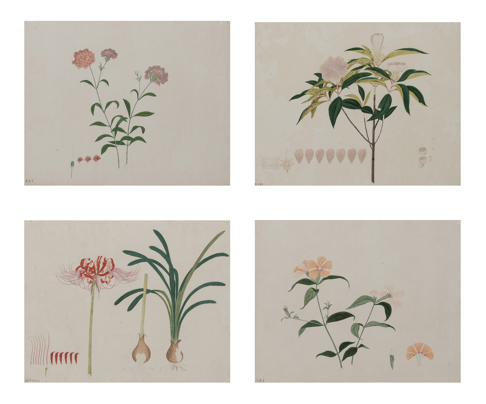 Lot image - Chinese School, 19th Century Four Botanical Studies