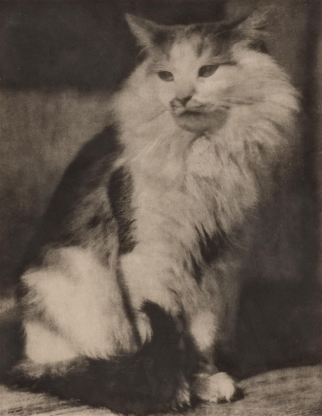 Lot image - EUGENE, FRANK [but now reattributed to HERTH, ANNA]  The Cat,
