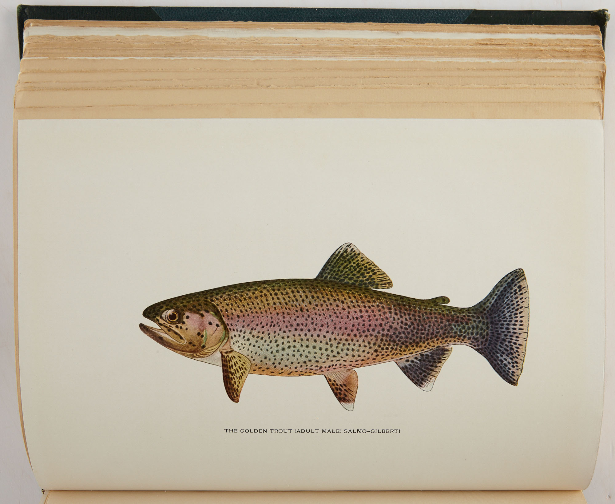 Lot image - SOUTHARD, CHARLES ZIBEON  Trout Fly-Fishing in America.