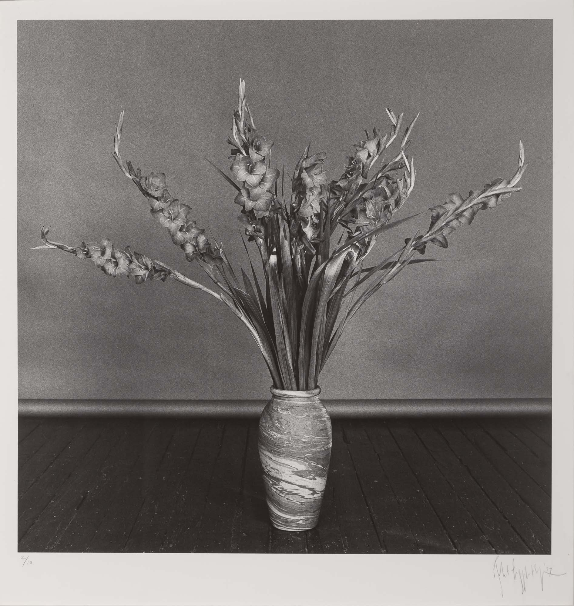Lot image - MAPPLETHORPE, ROBERT (1946-1989)  Gladioli,