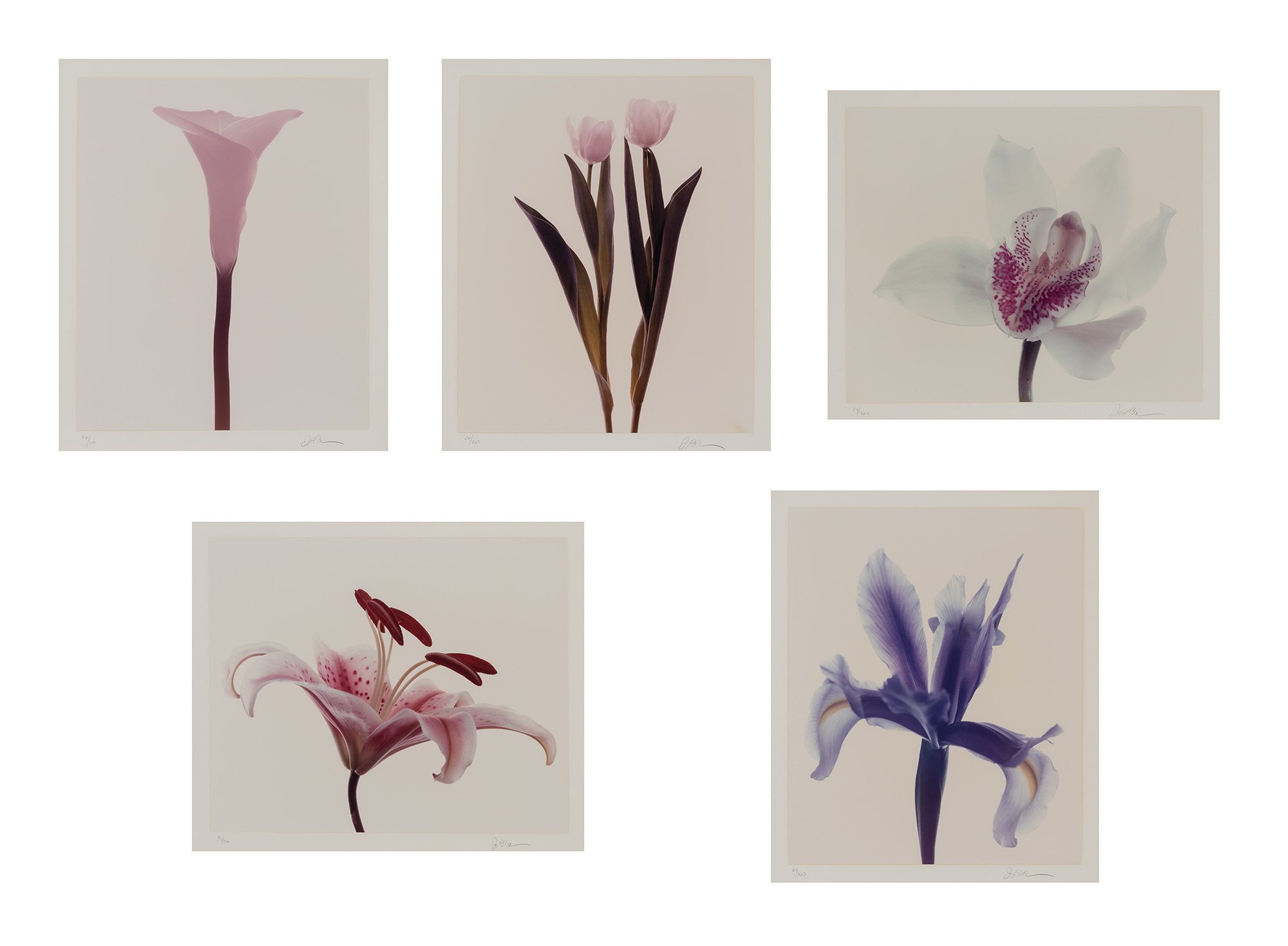 Lot image - PHOTOGRAPHS  Group of five translucent flower photographs.