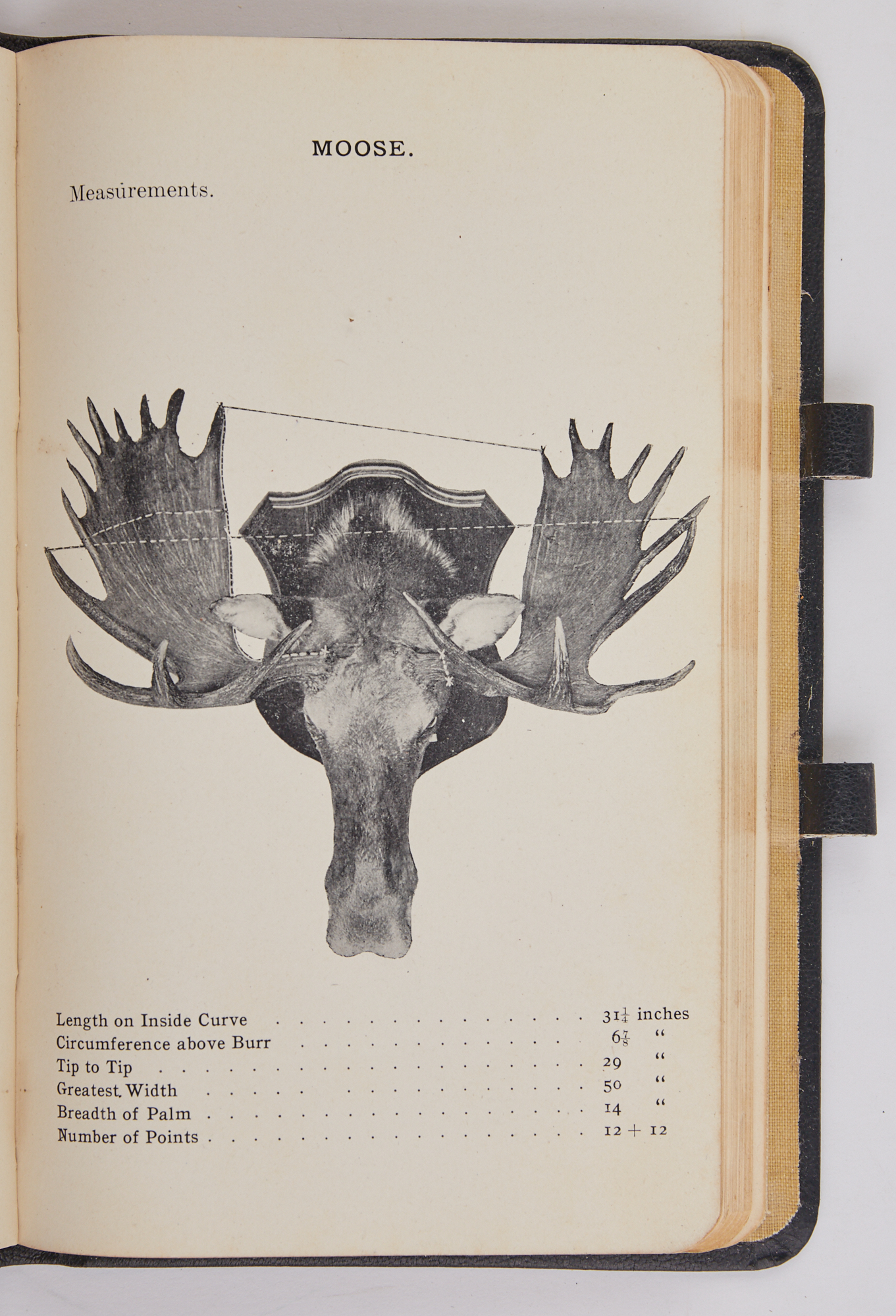 Lot image - [BOONE AND CROCKETT CLUB]  Game Book of the Boone and Crockett Club 1906.