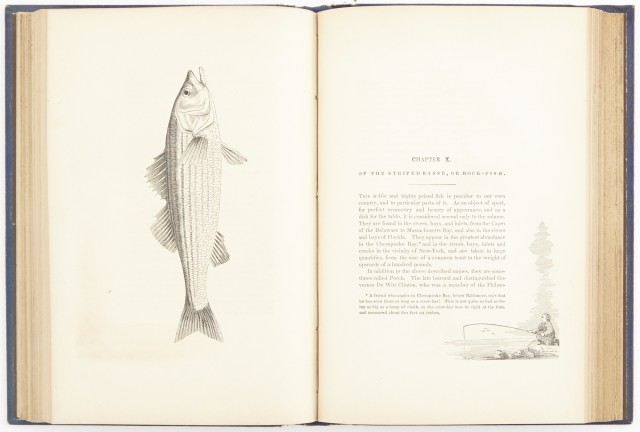 [BROWN, JOHN J.]  The American Angler\'s Guide;  or, Complete Fisher\'s Manual, for the United States: containing the opinions and practices of Experienced Anglers of Both Hemispheres.