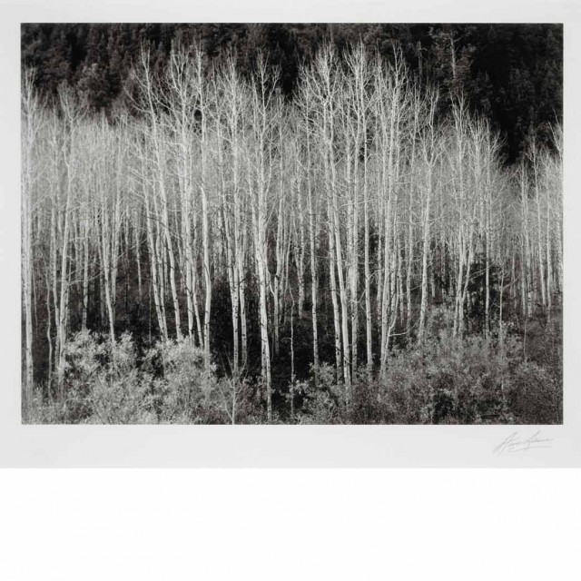 ADAMS, ANSEL (1902-1984) Aspens at Dawn, Dolores River, New Mexico [1937]. Gelatin silver print, 6 1/2 x 8 5/8 inches (162 x...