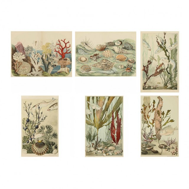 After Emile Belet [UNDERWATER MARINE LIFE STUDIES] 4 color heliotypes; T/w...