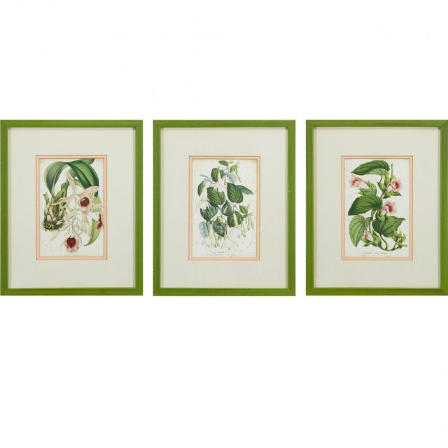 Louis van Houtte [PLANT STUDIES] Seven hand-colored ithographs; Together...