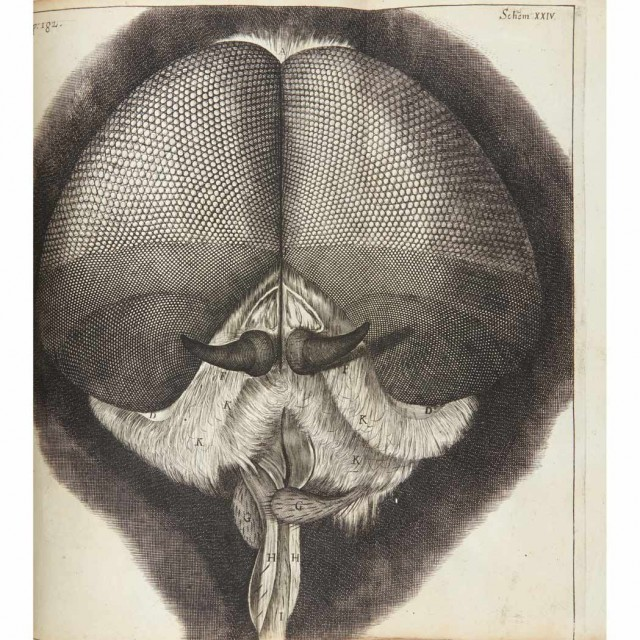 HOOKE, ROBERT  Micrographia, or Some Physiological Descriptions of Minute Bodies Made by Magnifying Glasses