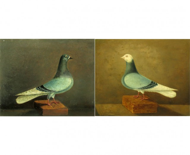 Prize Pigeons: A Pair
