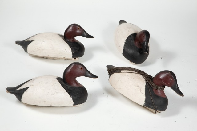 FOUR CANVASBACK DUCK DECOYS  Four carved and painted decoys of the Canvasback Duck.