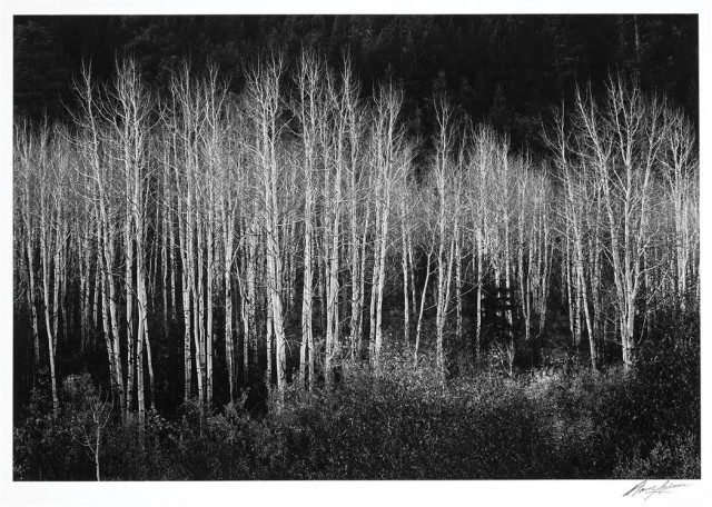 ADAMS, ANSEL (1902-1984)  Aspens, Dawn, Dolores River Canyon, Autumn, Colorado, 1937.