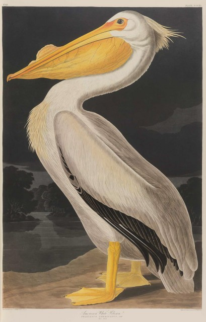 AUDUBON, JOHN JAMES  The Birds of America.