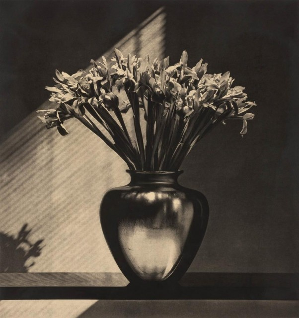MAPPLETHORPE, ROBERT (1946-1989)  Irises