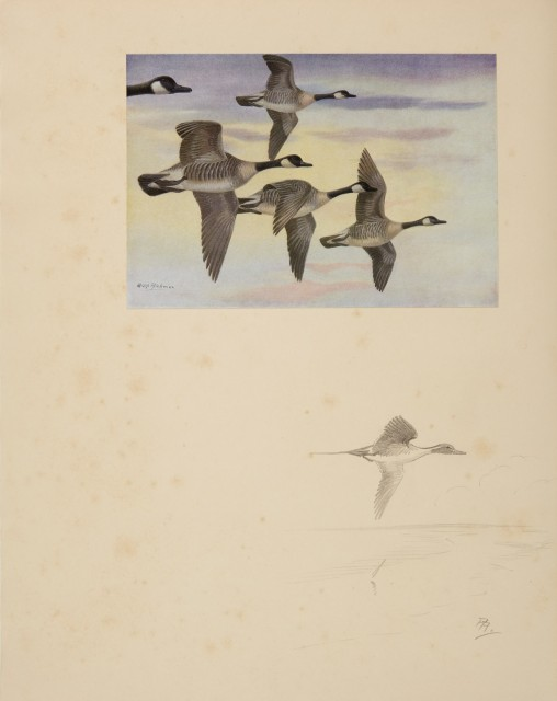 [H. B. C. and BARCLAY-SMITH, PHYLLIS]  British and American Game-Birds.